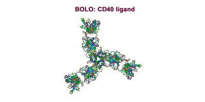 Antibody-points Bulletin: CD40 ligand