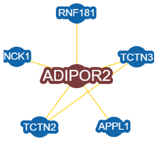 Be on the lookout for ADIPOR2: Receptor for ADIPOQ, an essential hormone secreted by adipocytes that regulates glucose and lipid metabolism.  Required for normal revascularization after chronic ischemia caused by severing of blood vessels.
